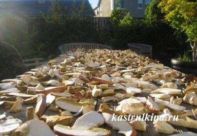 сушка грибов на солнце